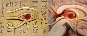 El Ojo de Horus egipcio y el sistema y posición de la Glándula Pineal.