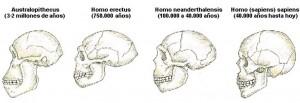 Formación del cráneo a lo largo de la historia evolucionista.